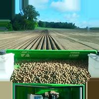 plantation pommes de terre CABC
